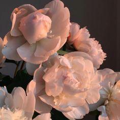 500 Lovely Flowers, Stunning Nature Art