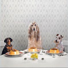 animals by Catherine Ledner