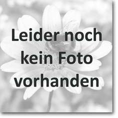 Stauden Stade Versand Shop: Iris sibirica 'Welfenfürstin' (Sibirische Garten-Schwertlilie) hier bestellen