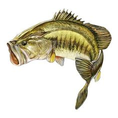 Jumping Bass Decal