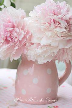 Pastel Pink Peonies polka dots ~ Carolyn Aiken, Aiken house gardens ~ Prince Edward Island, Canada.