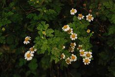 pola miña casa vin un día unha flor, saqueille unha foto e posta aquí acabou