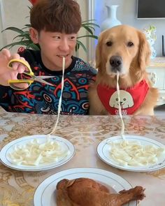 Dog And Puppies Small .Dog And Puppies Small Cute Funny Dogs, Cute Funny Animals, Cute Baby Animals, Cute Animal Videos, Funny Animal Pictures, Perro Papillon, Chien Golden Retriever, Retriever Dog, Funny Dog Videos