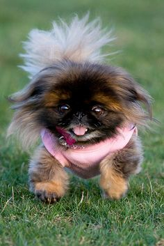 "I had a pekingese dog named Hokeywolf that spoke. He would say ""I love you"" and ""I wanna go out"". One of the coolest dogs ever!"