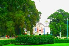 Tule tree and church, Oaxaca, Mexico