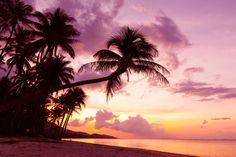 世界で人気の島ベスト2に選ばれた天国のような島「タークスカイコス島」 砂がピンクです。ピンクの小麦粉。ピンクの砂とエメラルドグリーンの海。一生忘れられない。