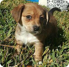 Dog Adoption Arlington Ma