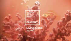 Pantone Names Living Coral 2019 Color of the Year Color-nerds, rejoice! 'Tis the season when we learn Pantone's it-color for the coming calendar year. In 2019 it's Pantone Living Coral, a vivid, warmly saturated shade between pink and orange. Coral Pantone, Pantone Color, Jonathan Adler, Color Inspiration, Interior Inspiration, Daily Inspiration, Fotos Do Instagram, Live Coral, Graphic Design Trends