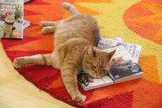 Hach - so ein Katzenleben ist doch was Feines! Bob geht auf Kuschelkurs mit seinen Geschichten. © Bastei Lübbe