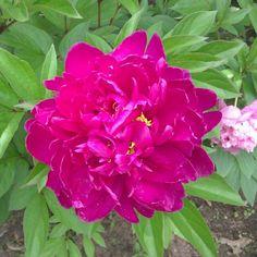 Random flower outside the office #photography #flower