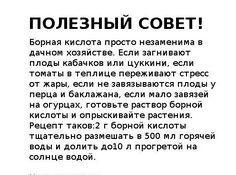 Борная кислота - применение в садоводстве. Обсуждение на LiveInternet - Российский Сервис Онлайн-Дневников