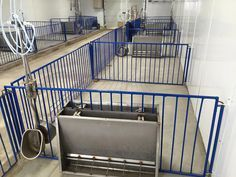 This barn used single sided stainless nursery feeders on one side, and double sided on the other. That way we can show how to use both effectively.