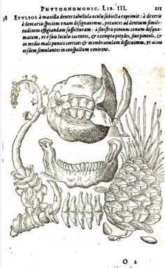 Porta Phytognomonica - Plants related to the teeth 1600 ca