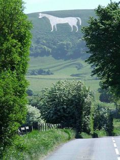 Westbury white horse, Wiltshire - actually stood right next to the horse in the hillside