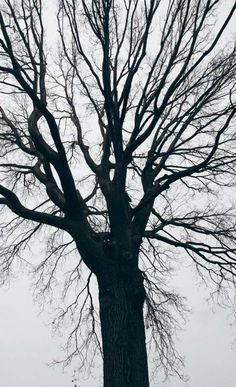 Tree - The Trees of Fort Greene Park - Nalata Nalata