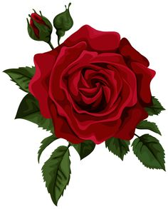 Red Rose With Bud Transparent PNG Clip Art Picture Gift FlowersFloral FlowersBeautiful