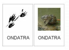 Lesní zvířata – (Mujblog.info v3.1) Education, Sd, Blog, Animals, Animales, Animaux, Blogging, Animal, Onderwijs