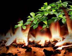 Apartment Fire Reminds us of the Importance of Fire Retardant #SilkPlants http://www.commercialsilk.com/toolkit/post/fire-ignited-silk-plant.aspx