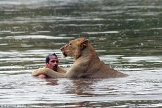 -; I just called to her and she came-; Kevin Richardson the lion whisperer.