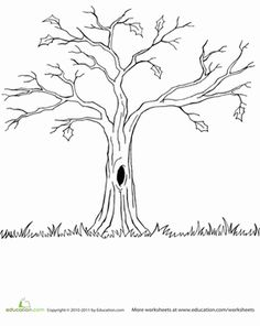 Fall Kindergarten Nature Worksheets: Bare Tree Coloring Page