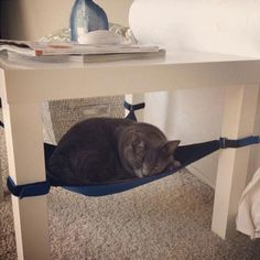 Cat hammock, why don't I have a couple of these...must investigate...