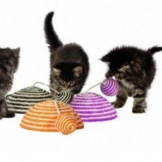 Tout le rayon chats - Un Chien En Ville