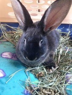 free-teen-bunny