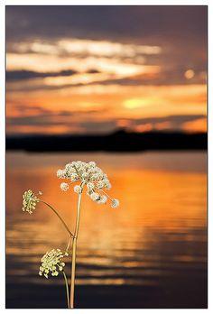 Magnificent sunset over lake Siljan, Sweden