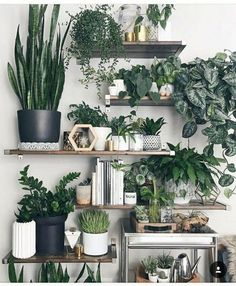 25 Lovely Indoor Jungle Ideas That Will Enhance Your Room Indoor Plants Clean Air, Indoor Plant Wall, Indoor Garden, Garden Plants, Garden Shelves, Plant Shelves, Build Your House, Deco Nature, Indoor Trees