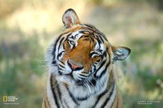 Güney Afrika'daki Tiger Kanyonu'nda karşımıza çıkan Indira'nın sol gözünde tembellik var.
