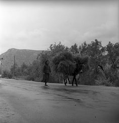 lamia, greece may 1959 peasant with donkey set includes photographs of the delphi ruins; also shots of city life in lamia, greece. from nick and maggie's spring 1959 trip to europe. part of an archival project, featuring the photographs of nick dewolf Photo Archive, City Life, Greece, Europe, Black And White, Donkey, Beach, Water, Outdoor