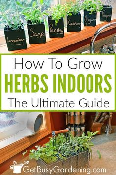 How To Grow Herbs Indoors: The Ultimate Guide Indoor herb gardening is fun, but can be challenging. Learn all you need to know in order to be successful in this detailed guide to growing herbs indoors! Spice Garden, Diy Herb Garden, Garden Pots, Herb Garden In Kitchen, Garden Bed, Garden Ideas, Hanging Herbs, Hanging Pots, Hanging Baskets