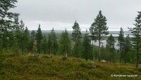 Municipality of Kemijärvi in Finnish Lapland. Forests, Wilderness, Mountains, Film, Nature, Plants, Travel, Outdoor, Movie