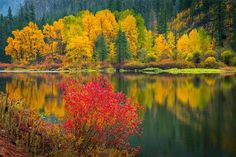Wenatchee River Reflections ... by Dan Mihai  More: http://alllandscapephotography.blogspot.com/2014/11/wenatchee-river-reflections-by-dan-mihai.html  #autumn #autumncolors #beautiful #fall #fallcolors #forest #green #landscape #landscapes #leavenworth #nature #orange #pacificnorthwest #red #river #stevenspass #tumwater #tumwater canyon #washington #landscapephotography   #landscapephoto  #wenatchee #yellow #Amazing   #amazingphotos   #amazinglandscapes