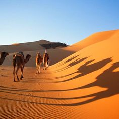 Morocco Lifetime Tours : Morocco Tours, Private Desert Tours From Marrakech & Excursions From Marrakech 3 Days Trip, Desert Tour, Marrakech, Morocco, Camel, Deserts, Tours, Animals, Animales