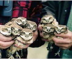 So many owls!