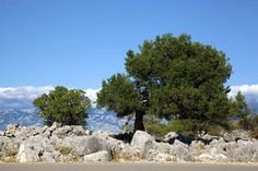 VLM – Vrtovi Lunjskih Maslina Island, Plants, Block Island, Flora, Plant, Islands, Planting