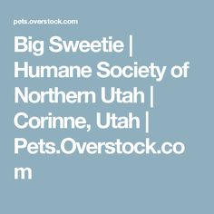 Big Sweetie | Humane Society of Northern Utah | Corinne, Utah | Pets.Overstock.com