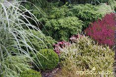 Ogród z lustrem - strona 324 - Forum ogrodnicze - Ogrodowisko Herbs, Landscape, Plants, Scenery, Herb, Plant, Corner Landscaping, Planets, Medicinal Plants