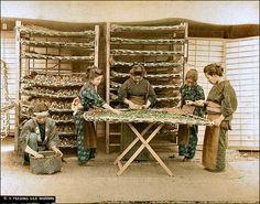 Feeding Silk Worms    Handcolored japanese albumen print. Ca 1900. Unidentified photographer.