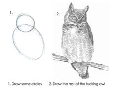 How to draw an owl.... I fucking died laughing at this.