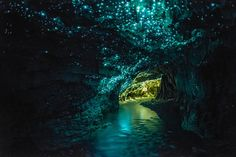 Las cuevas Glowworm en Waitomo, Nueva Zelanda. Mosquito endémico teje unos finos hilos de seda que después ilumina con la parte posterior de su cuerpo para atraer a sus presas