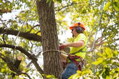 One of the most difficult tasks for any homeowner is to find a service they need when they don't really know the best type of provider for the job. When a tree needs to be removed because it has deteriorated due to age, disease, or other type of damage, removal may be the only option.