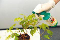 Čo potrebujú jednotlivé druhy izbových rastlín, aby sa im darilo? Drinks, Bottle, Food, Drinking, Beverages, Flask, Essen, Drink, Meals