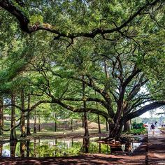The Enchanted Forest after a shower. #LSU