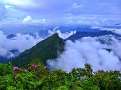 TRIPS ON THE WORLD. Путешествия по миру.: ANIMAL KINGDOM BORNEO, MALAYSIA. Остров Борнео. Жи...
