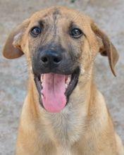 OSCAR, Hund, Mischlingshund in Italien