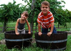 22nd Annual Harvest Grape Stomp @ Lakeridge Winery & Vineyards in Clermont, FL Aug 13, 2016 10:00a - 05:00pm Aug 14, 2016 11:00a - 05:00pm