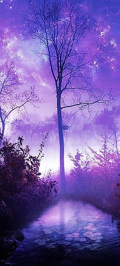 Misty Lavender Morning