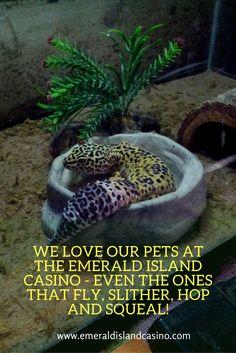 Meet some of Emerald Island Casino's pets!   #dogs #casino